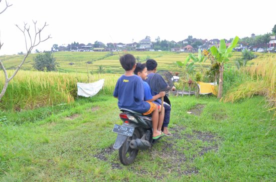 Jatiluwih Green Land: Jatiluwih rice terrace