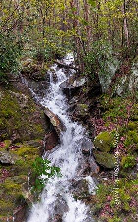 "Great Smoky Mountains National Park, Carolina del Norte: ""unending streaming"", North Carolina roadside"