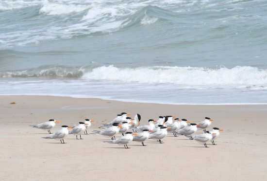 Canaveral National Seashore: photo2.jpg
