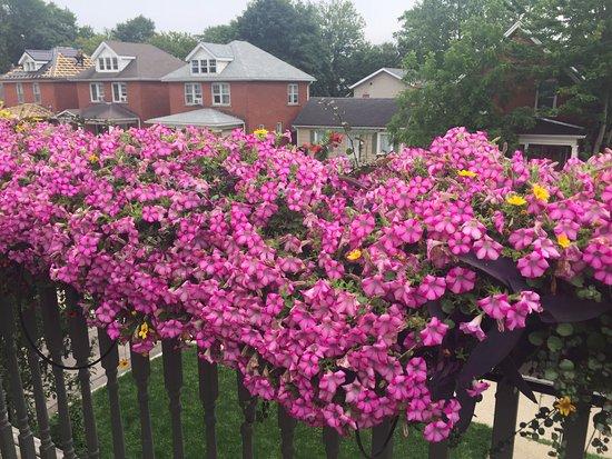Avery House B&B: Beautiful flowers on the balcony