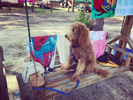 Madison, FL: Yogi Bear's Jellystone Park