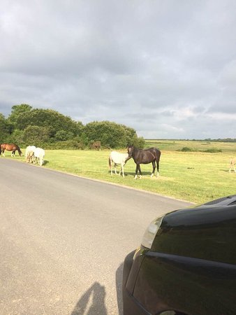 Swansea County, UK: Visiting with our beautiful Fairwood Faerie ponies