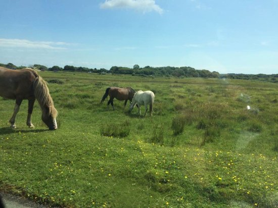 Swansea County, UK: Fairwood Faerie ponies