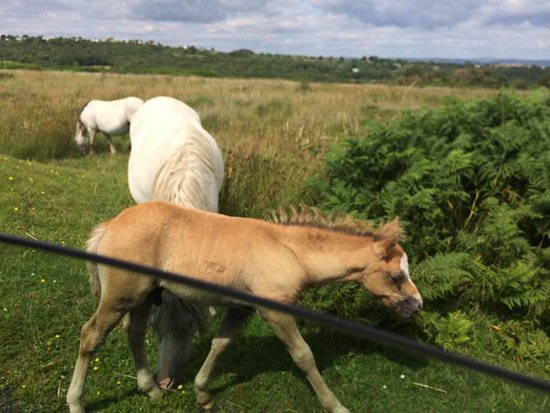 Swansea County, UK: Fairwood Faerie ponies, our beautiful new foals, such sweet delicate mouths! A joy to behold