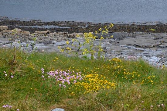 The Burren, Irlandia: Walking the Flaggy Shore