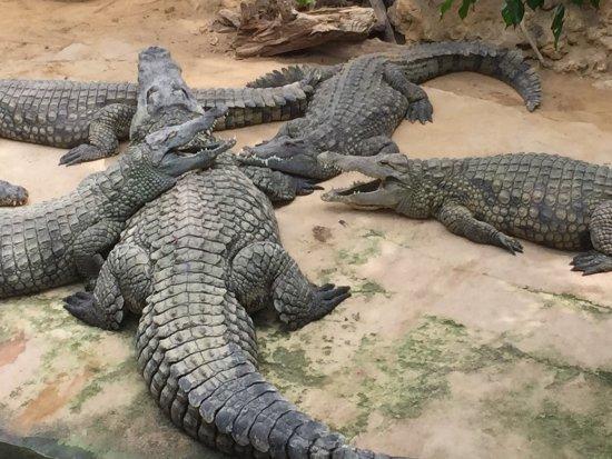 La Ferme aux Crocodiles : Remarquable ferme