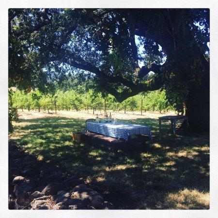 Kenwood, كاليفورنيا: MacLeod Family Vineyard
