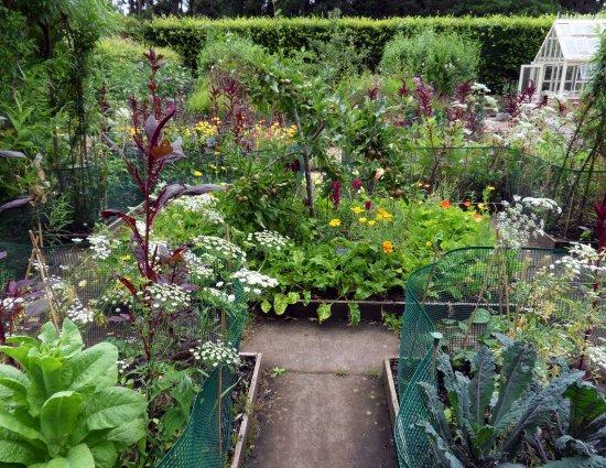 Potager garden, Ness Gardens - Picture of Ness Botanic Gardens, Ness ...