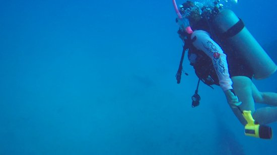 Tavernier, FL: Hard to see in the picture, but this was our first real shark!!! 95' under the sea (Eagle Wreck)