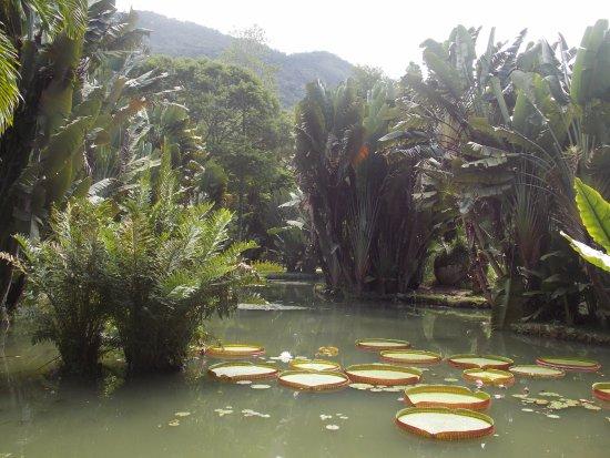 Emporio Jardim at IMS: verde