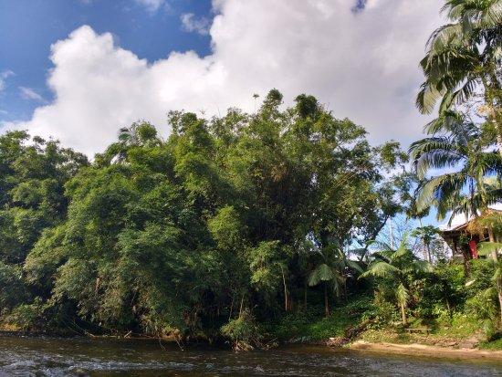 Nhundiaquara River: rio com vegetação típica da Mata  Atlântica