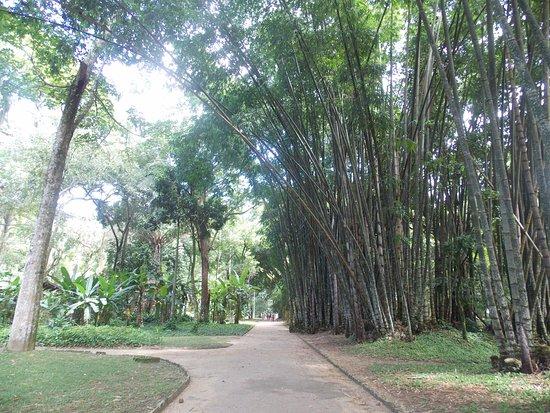Emporio Jardim at IMS: Muito verde