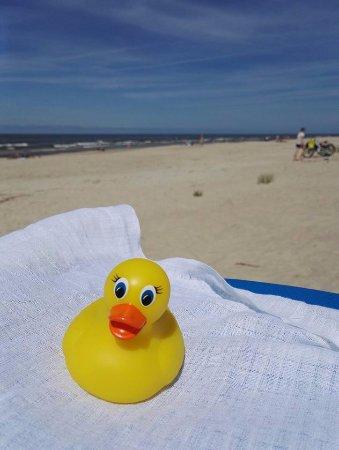 Duck on the Nida beach