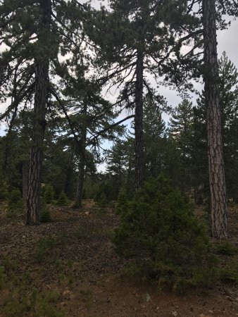 Troodos mountain range in Cyprus is a magnificent place to visit, with its highest peak at 1952