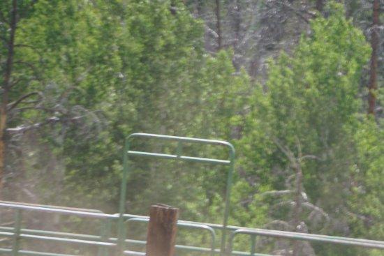 Kremmling, CO: Cattle cutting