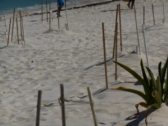 Villas DeRosa Beach Resort: These are all turtle nests on the hotel beach! If you come here keep lights off at night.