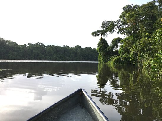 Canoe tour provides closer view of the many animals of Tortuguero