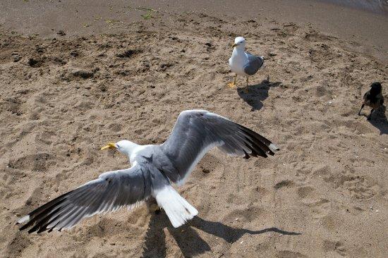 Ada Beach Club: CD5A9898-01~01_large.jpg
