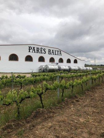 Pacs del Penedes, Spain: photo3.jpg