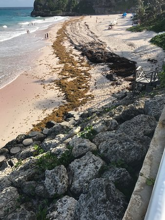 Union Hall, Μπαρμπάντος: Crane Beach July 15 Health Concern on Seaweed