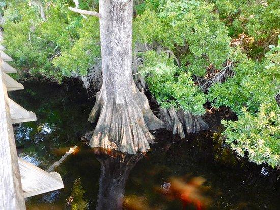 New Bern, Carolina del Norte: Cypress by the dock