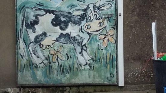 Llanbedr, UK: milking shed.