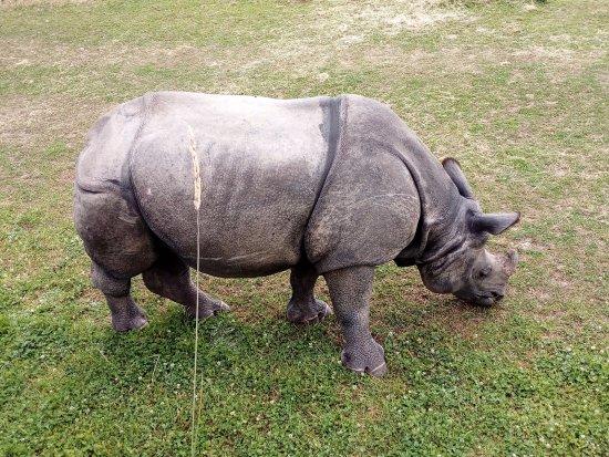 County Cork, Irlanda: Rhino