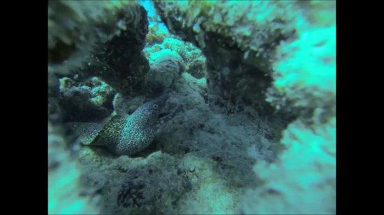 Scuba Playa Dive Shop : Moräne