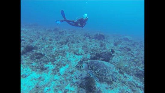 Scuba Playa Dive Shop : Schildkröte