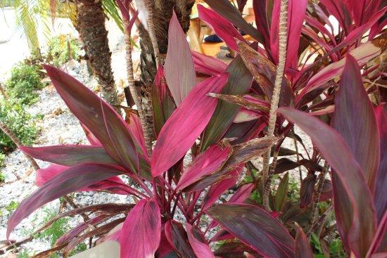 Cortez, FL: photo6.jpg