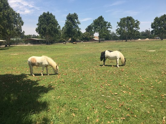 Quicksilver Ranch: photo3.jpg