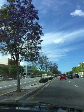 Bilde fra Beverly Hills