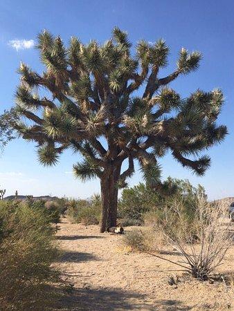Twentynine Palms, CA: image-0-02-01-abc74eac82c4ed1fb82c71bb15cb5bd93cd37894cfe732e00e4e871cf89109e6-V_large.jpg