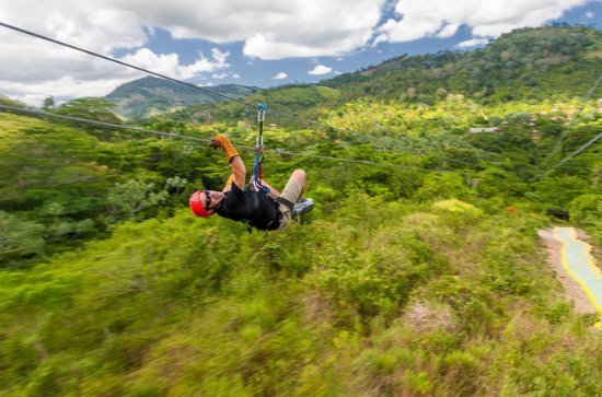 Monkeyland and Zipline Adventure from...