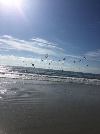 Bryn Mawr Ocean Resort: photo2.jpg
