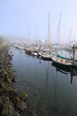 Puget Sound Express - Day Trips : Morning fog and calm before we boarded.