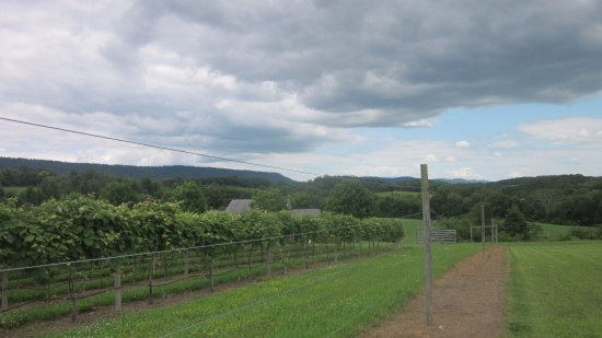 Bucks Valley Winery and Vineyards