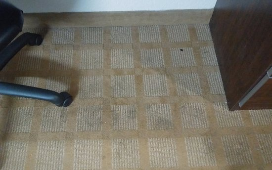Microtel Inn & Suites by Wyndham Bryson City: Carpet stains