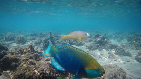 Montalay Beach Resort : photo0.jpg