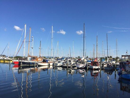 Torrig L, Danmark: photo2.jpg
