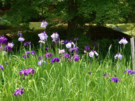 Shirakawa, Japan: 庭の花