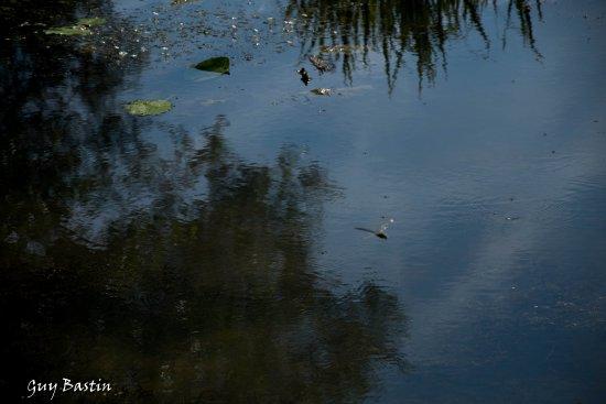Fosses-la-Ville, Бельгия: Les libellules aussi aiment l'endroit