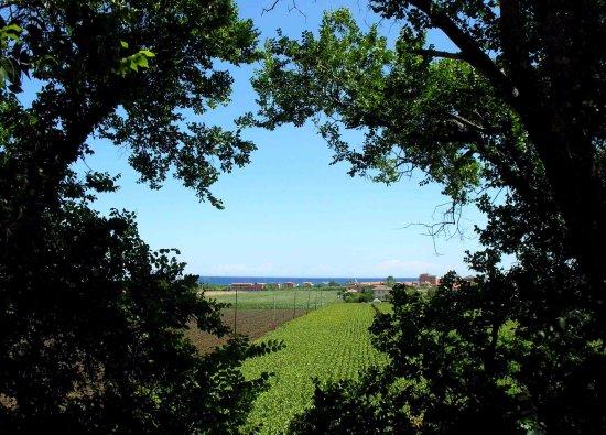 San Costanzo, Italy: il Casolare vista panoramica - Torrette di Fano PU - Redgekko B&B