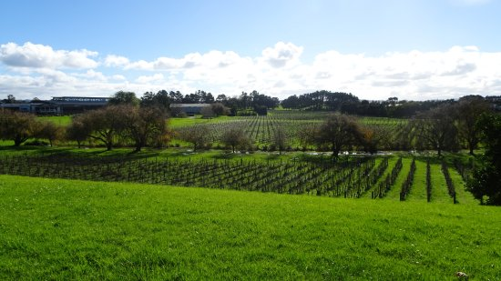 Mangere, Nueva Zelanda: Looking over the vineyard from the edge of the volcnic cone