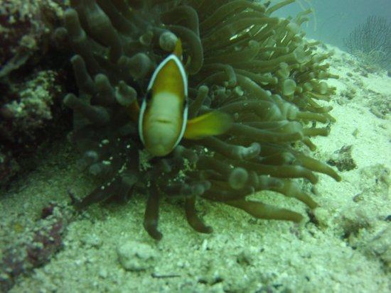 Savedra Dive Center: micr0442_large.jpg