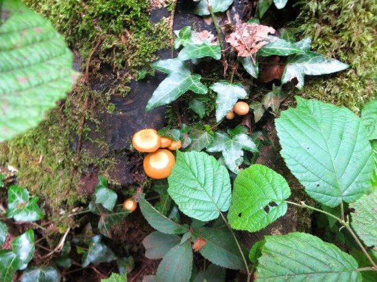 Coleford, UK: Fairy toadstools?