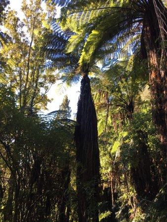 Rotoiti, Nueva Zelanda: photo2.jpg