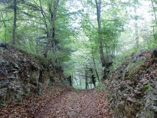 Terlago, Italy: La selva Faeda