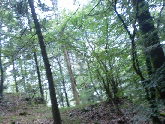 Terlago, Italy: A spasso nella selva