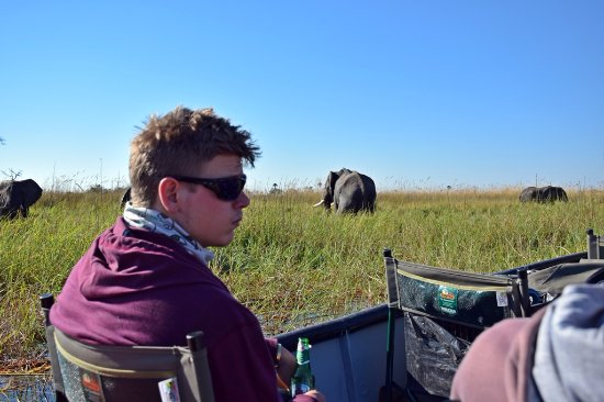 Maun, Botswana: Viewing elephants from the boat